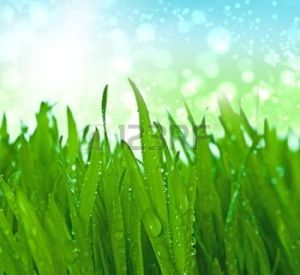 9864021-l-herbe-avec-des-gouttes-d-eau-en-d-but-de-matin-e